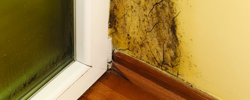 TYPES OF HOME MOLD