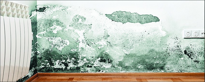 EVERYTHING YOU NEED TO KNOW ABOUT MOLD AND THE IMMEDIATE STEPS TO TAKE